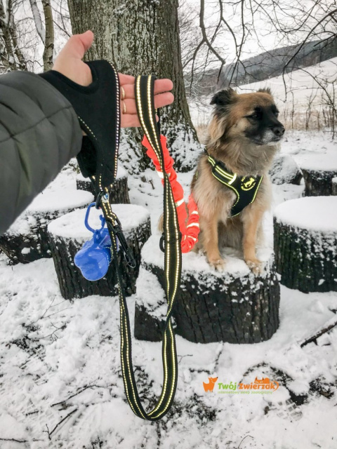 All For Dogs smycz sportowa z rączką + GRATIS